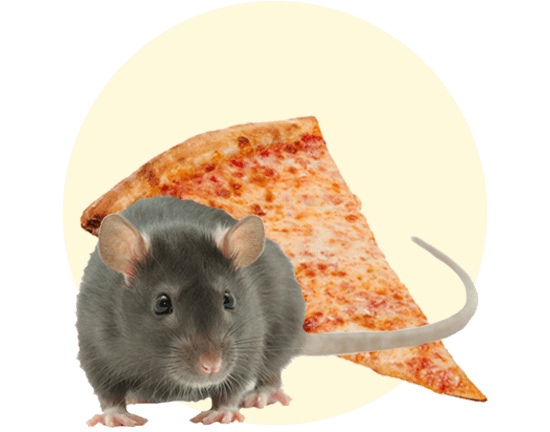 Pizza Rat hero